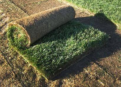 Мятликовый газон Green Garth