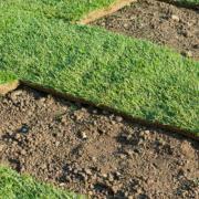 Мятликовый газон 4