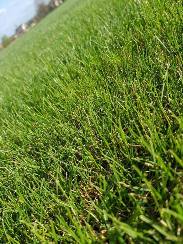 Спортивный газон Green Garth