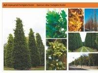 Дуб черешчатый'Fastigiata Koster' Quercus robur'Fastigiata Koster'Дуб черешчатый 'Fastigiata Koster' Quercus robur 'Fastigiata Koster' Green Garth