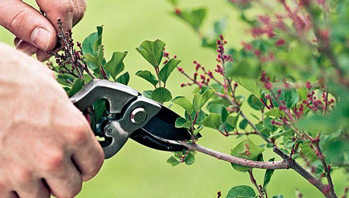 Сезонная обрезка деревьев и кустарников