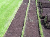 Универсальный газонРулонный газон