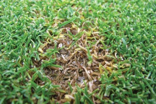 Болезни и лечение газона
