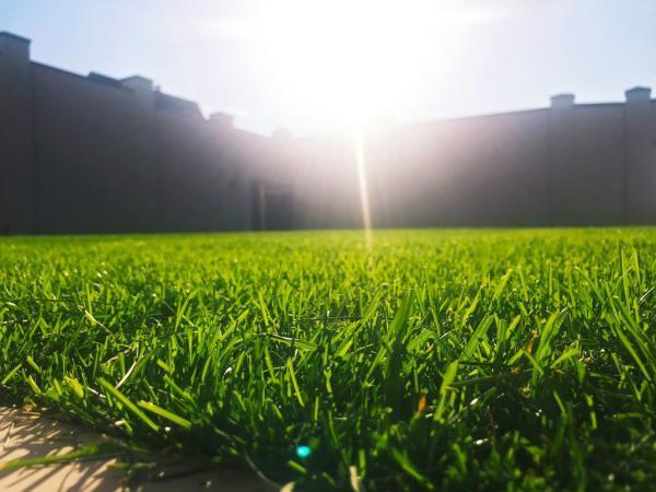 Правила укладки рулонного газона