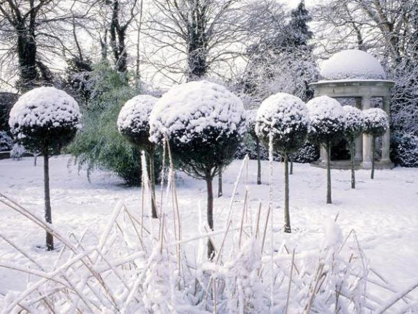 Ландшафтный дизайн зимнего сада
