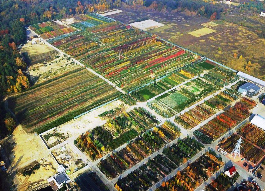 Питомник растений киев Грин Гарт