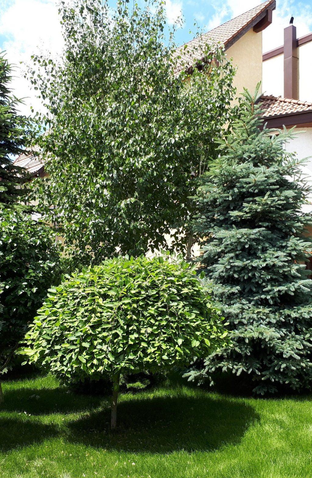 Озеленение сада, двора, дачи